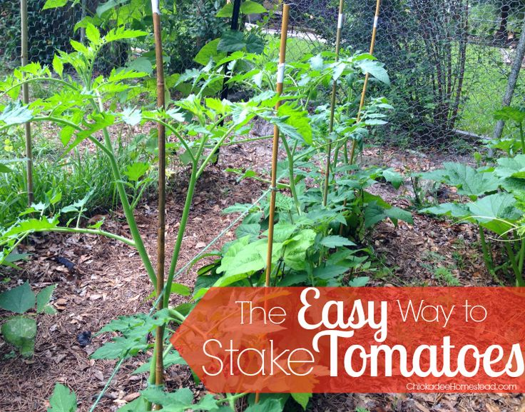 The easy way to stake tomatoes chickadee homestead for Garden plant information
