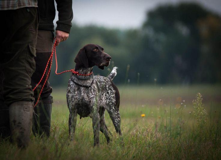 Ze wszystkich psów myśliwskich najbardziej kojarzone z łowiectwem są wyżły. Ich zalety wysoko cenią myśliwi na całym świecie, polując z nimi na ptactwo wodne i polne, drapieżniki oraz zwierzynę grubą. Można z całą pewnością powiedzieć, że dobrze wyszkolony wyżeł sprawdzi się w każdym łowisku.