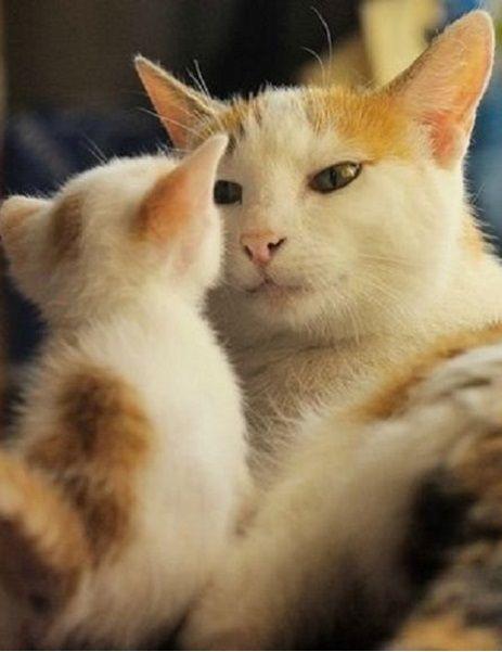 10238 Best Beauty Ideas Images On Pinterest: 10238 Best Cat Art, Cat Photos And Stuff... Images On