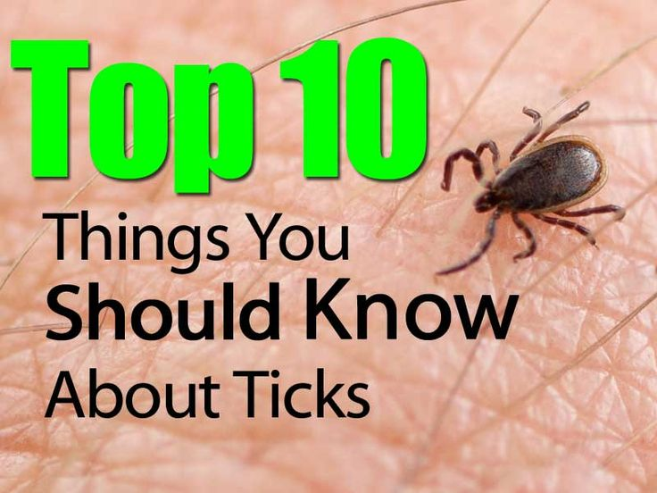 how to kill ticks in your clothes