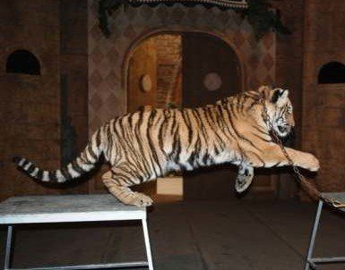 Petition · Canada's Accredited Zoos And Aquariums, Animal Alliance of Canada, canadian zoo and aquarium association, CAZA, Leader, Liberal Party of Canada/Chef, Parti libéral du CanadaJustin Trudeau: Stop Michael Hackenberger- Bowmanville Zoo Animal Abuser · Change.org