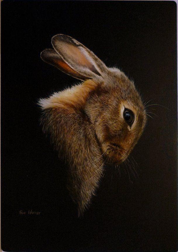 'Lievre','Hare'- by Sue Warner, peintre et dessinatrice animalière - huile sur toile.