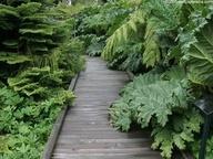 Tropical garden #Home
