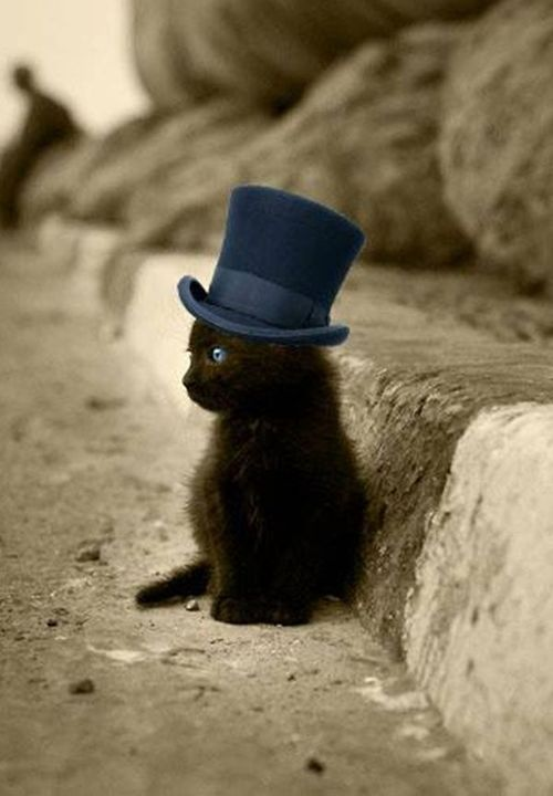 Kitty in a top hat, adorable!