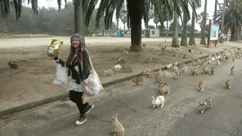 It might be funny, but I think that many rabbits running after me would be scary...