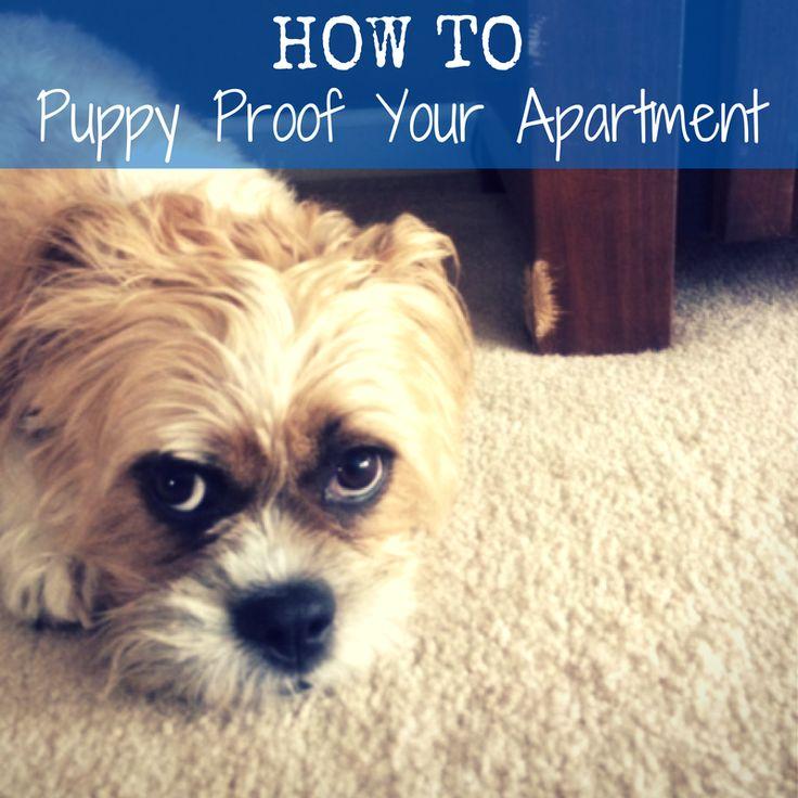 Apartment Dogs: Best 25+ Apartment Dog Ideas On Pinterest
