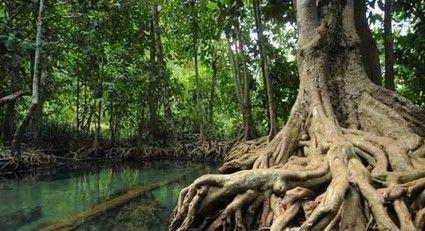 Jim Britton | Plants, Rainforests and Rainforest plants