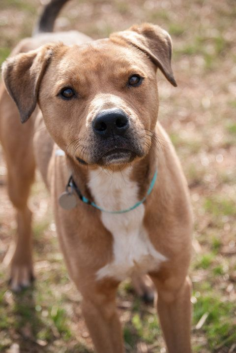 Huntsville Humane Society Dogs For Adoption