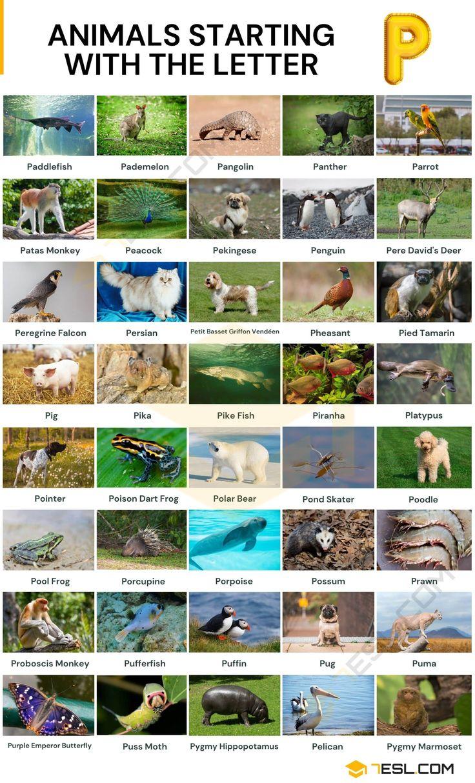Animals That Start With P List Of 41 Animals Starting With P 7esl In 2021 Animals Animal Species Wildlife Animals