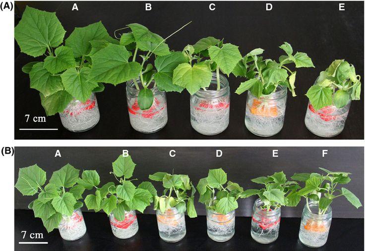 Plant Pot Design