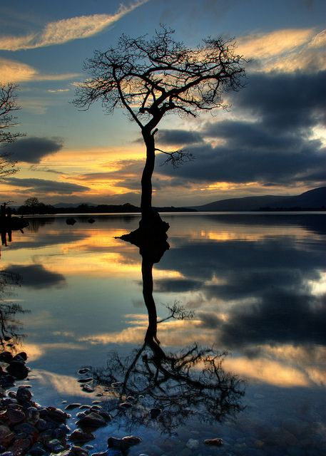 A solitary tree reflected in the mirror of calm water.