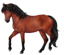 Jeu cheval : MonChval.com est la référence parmi les jeux d'équitation et d'élevage de chevaux virtuels. Dans cette simulation de centre équestre : chevaux, poneys, galops fédéraux, site ludo-éducatif et jeux.