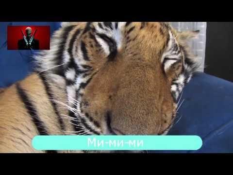 Video Compilation November 2015 №6 Подборка Смешных Видео Ноябрь 2015 №6
