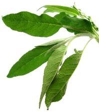 Czym są zioła?  liscieZ naukowego punktu widzenia ziołami nazywamy botaniczne rośliny zielne, o nietrwałej strukturze, tj. delikatnych częściach naziemnych, miękkich i co najwyżej w niewielkim stopniu zdrewniałych.