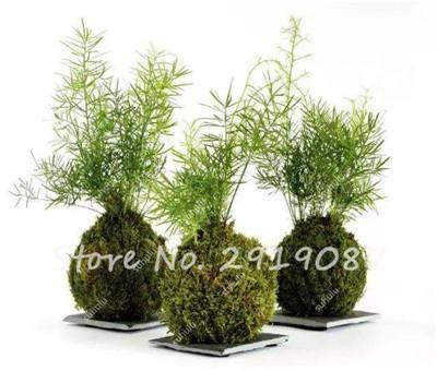 300 Pcs Bryophyte Moss Bonsai Seeds Home Garden Ornamental Plant Potted Flowers Lovely Moss Ball Decorative Grass Seeds