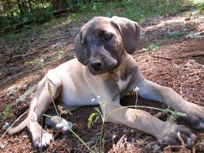Traditional Dog Diet: Raw Feeding