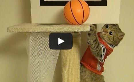 Cats Playing Basketball Cute Animals Pinterest Cats
