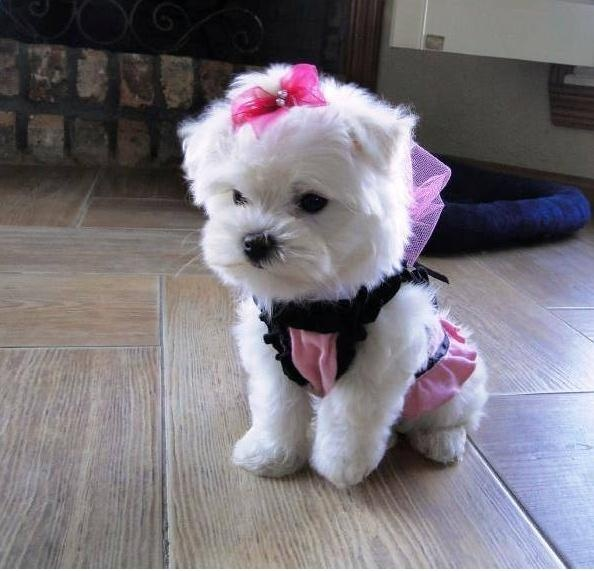 Pocket -Pup