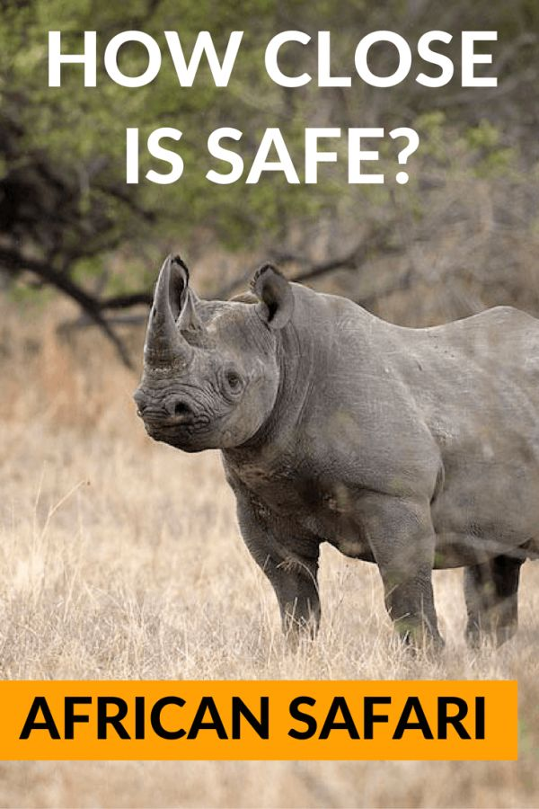 A question that vexes anyone exploring southern Africa. Here we consider how close you can, and should, get to the animals when on safari. Is there any hard-fast rule? #AfricaTravel #Safari #Adventure