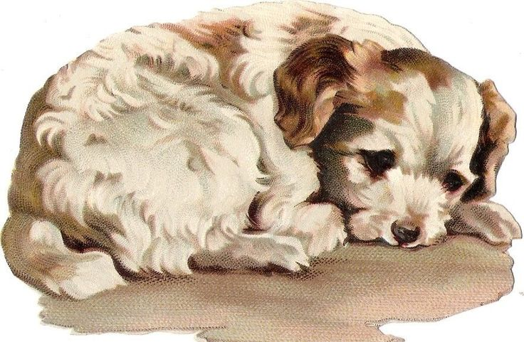 Oblaten Glanzbild scrap die cut chromo Hund dog  11,5 cm chien Welpe puppy