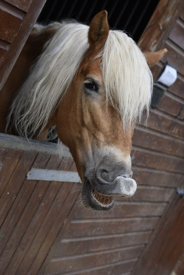 Our Pony Penny smiling :)