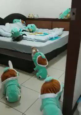 #Cats  #Cat  #Kittens  #Kitten  #Kitty  #Pets  #Pet  #Meow  #Moe  #CuteCats  #CuteCat #CuteKittens #CuteKitten #MeowMoe      Cats in Squirtle Costumes ...   http://www.meowmoe.com/41537/