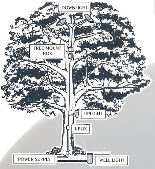 Mercury vapor tree lighting guide for succesful moonlighting and accent lighting of trees.  #landscapelighting #treelightingguide