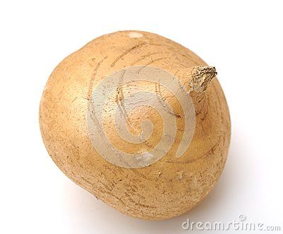 Jicama Root - Download From Over 56 Million High Quality Stock Photos, Images, Vectors. Sign up for FREE today. Image: 30186617