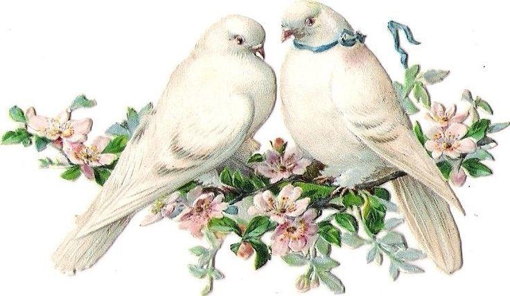 Oblaten Glanzbild scrap die cut  chromo  Taube dove  pigeon  Paar  Ast  blossom