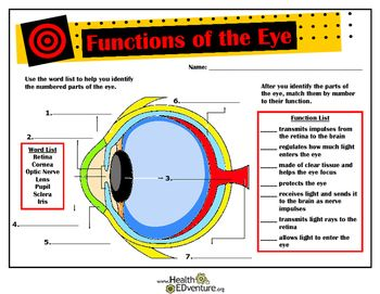 This activity is a good introduction to the anatomy and functions of the eye. Students will identify the parts of the eye from a colored diagram and match them with the functions they perform.  The iris, lens, retina, cornea, optic nerve, sclera and pupil are covered.Find over 330 different health activities at the Health EDventure store.
