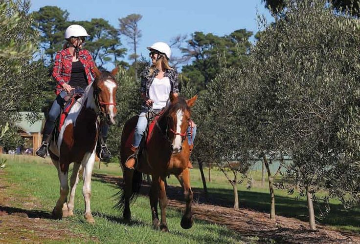 Horseback Winery Tours, Mornington Peninsula