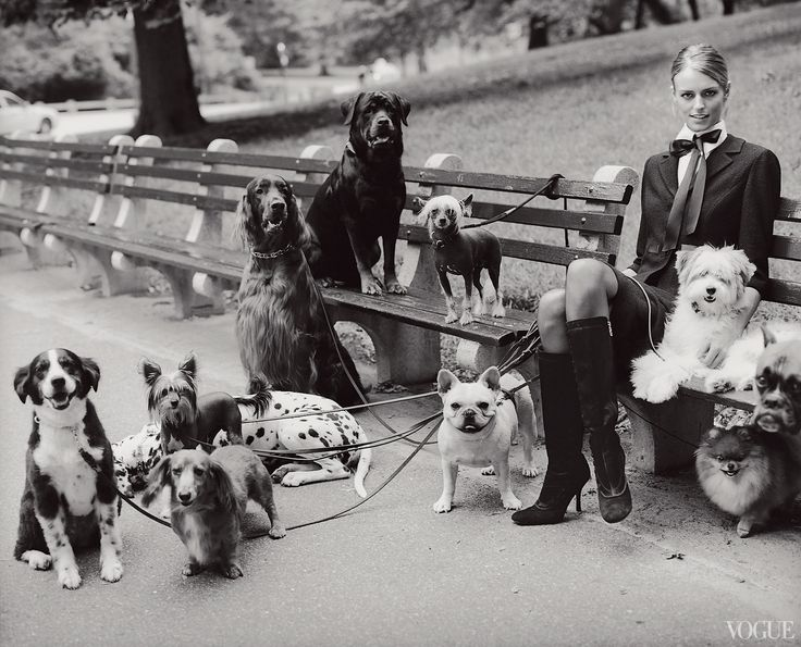 From the Archives: Dogs in Vogue