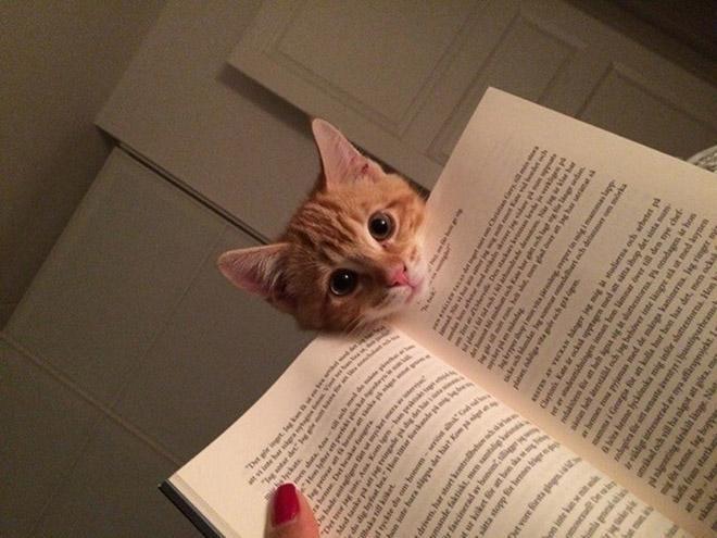 21 huisdieren die hun baasje 'helpen' met lezen http://www.brekend.nl/2015/03/13/21-huisdieren-die-hun-baasje-helpen-met-lezen/…