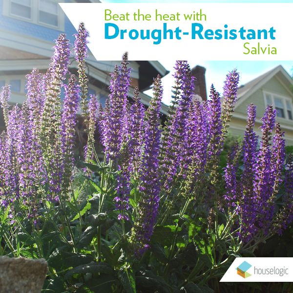 Plant one of these low-maintenance, drought-resistant stunners for instant curb appeal.