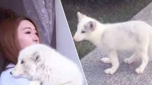 Officially...Archangel641's Blog: Woman sold a FOX instead of a puppy.