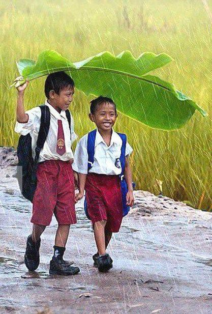 Smiling Young Boys Walking to School in the Rain, with a Banana Leaf Umbrella, Indonesia.