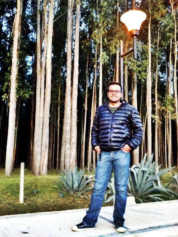 Forest Boyacá  Colombia Bosque Antiguo