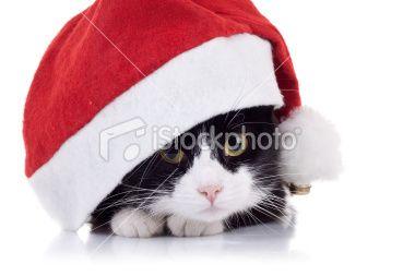 #Cat Hiding in Santa Cat #Postcard