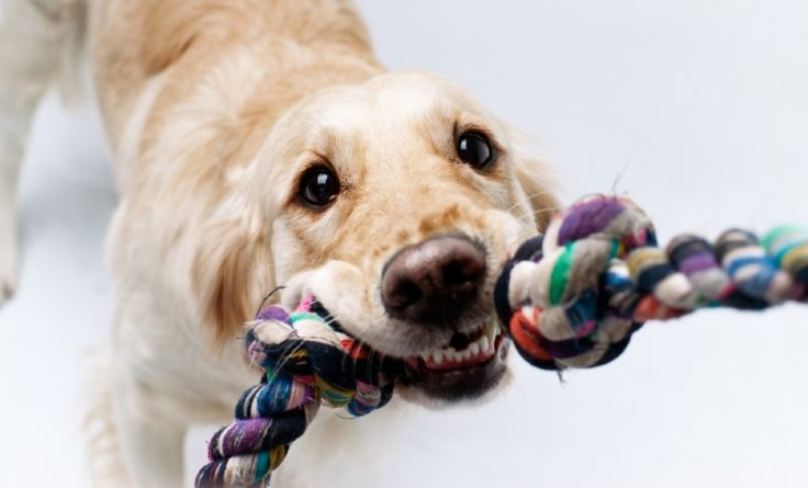 Looking for simple and fun indoor games for your dog? Check out this list of 10 easy games you can play inside to keep your dog entertained, exercised and busy.