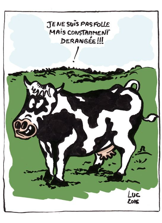 131 best humour d 39 actus images on pinterest humor html - Dessin vache humour ...