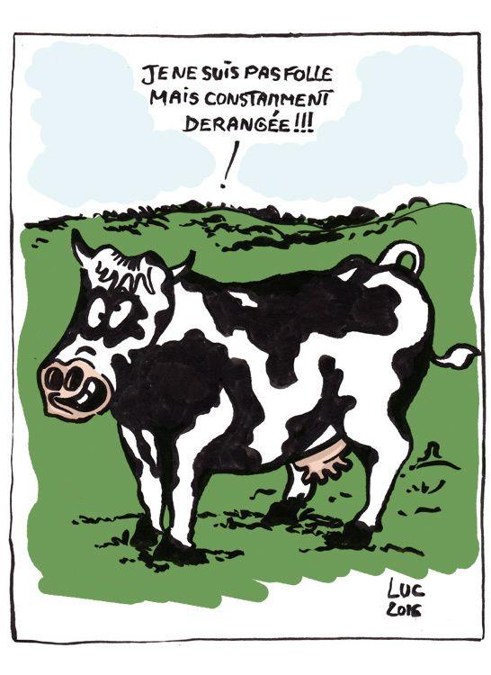 #vachefolle #Ardennes #vache #folle #santé