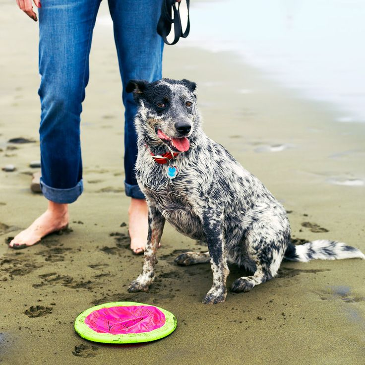 62 best vacations with your dog images on pinterest