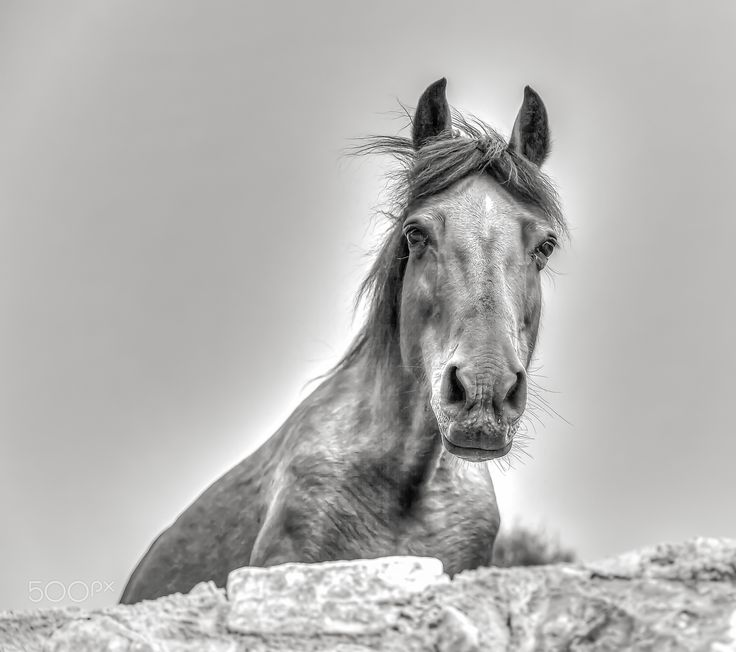 Horsin Around - Black & White Portrait Photography  of a beautiful mare who loved being Photographed. A natural model.  www.macsnapshot.com
