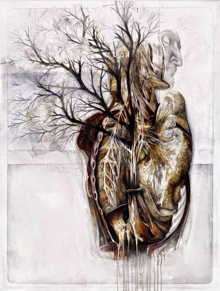 49 besten anatomic Bilder auf Pinterest | Menschliche anatomie ...