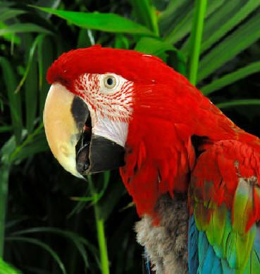amazon rainforest plants and animals. amazon rainforest parrot red green bold animal blue lime plants and animals c