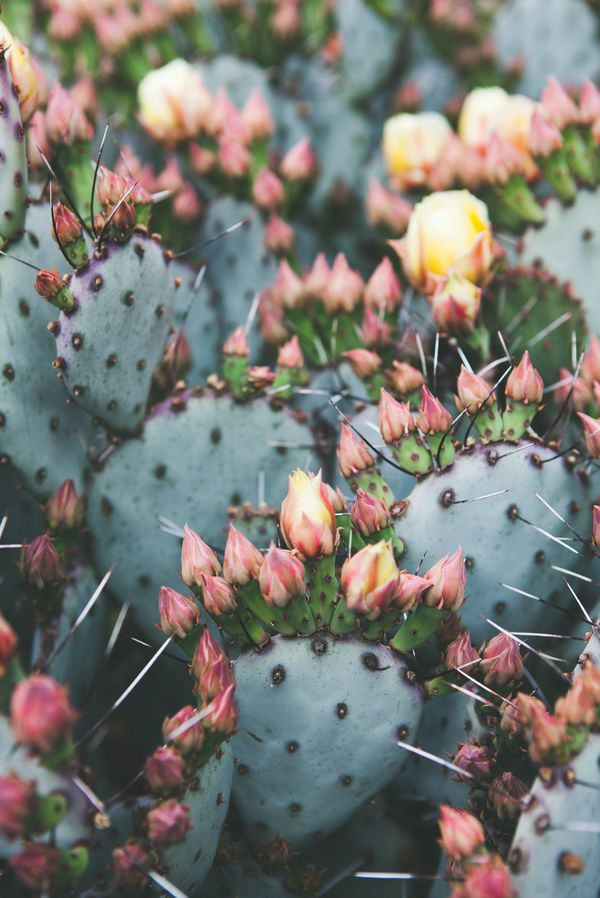"Prickly Pear by Catherine McDonald on Artfully Walls 20""x28"" $89.50"