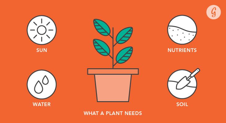 Gardening 101: Everything You Need to Know to Actually See Your Garden Grow