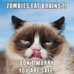 You are safe;).     Funny grumpy cat quotes, grumpy cat funny, funny grumpy cat, grouchy cat, grouchy quotes …For more hilarious humor and funny pics visit www.bestfunnyjokes4u.com