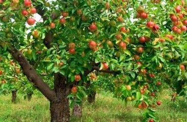 Lors de spots ou d'émissions de jardinage, sur les « forums » Internet ou dans les échanges de questions-réponses, on parle très fréquemment de badigeons à appliquer sur les troncs d'arbres fruitiers, et de nombreuses compositions ou mélanges sont proposés. On en trouve des plus fantaisist…