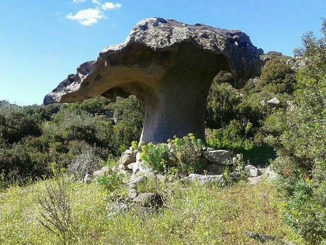 Il fungo di roccia ,Orotelli